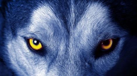 soul-of-wolf_952.jpeg